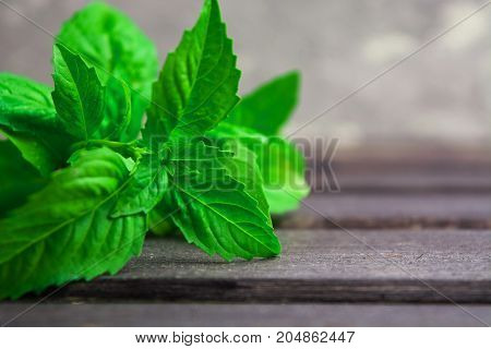 Italian spice green fresh basil on wooden table with copy space closeup view