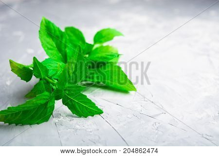 Closeup view of green italian basil over rude background