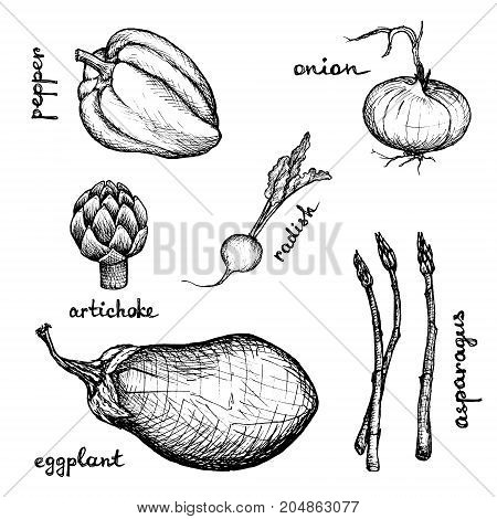 Vegan Menu - Eggplant Radish Artichoke Onion Pepper Asparagus - hand-drawn objects