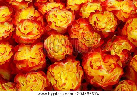 Selection of Various colorful Flowers as a background