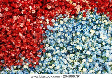Selection of Various red blue colorful Flowers as a background