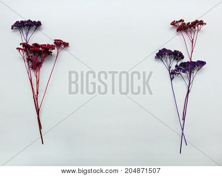 Dry flowers Flat lay A few sprigs of dried flowers of lilac and red color on a white background Trendy photo template with space for text