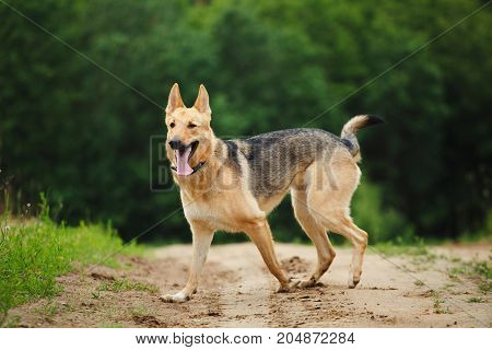 Dog Standing On A Country Road