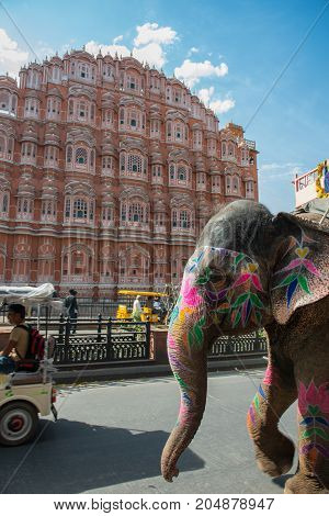 JAIPUR RAJASTHAN INDIA - MARCH 11 2016: Vertical picture of elephant head in front of Jaipur known as pink city of Rajasthan in India.