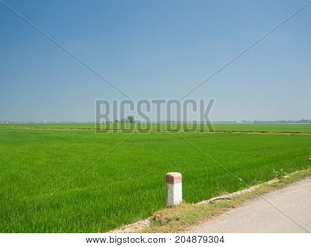 Rice fields on Cham Islands, 5km from Hoian town, Tan Hiep commune, Quang Nam province, in Hoian Vietnam.