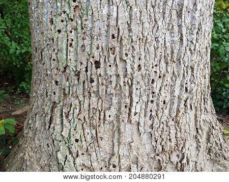 a brown tree wth holes in the bark