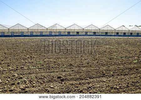 Polycarbonate Greenhouses. Greenhouse Complex. Greenhouses For Growing Vegetables Under The Closed G