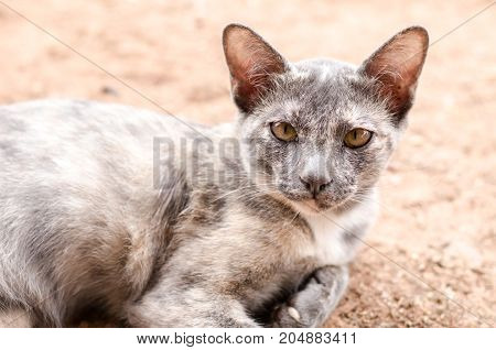 Gray cat on the ground, cute animal and pet