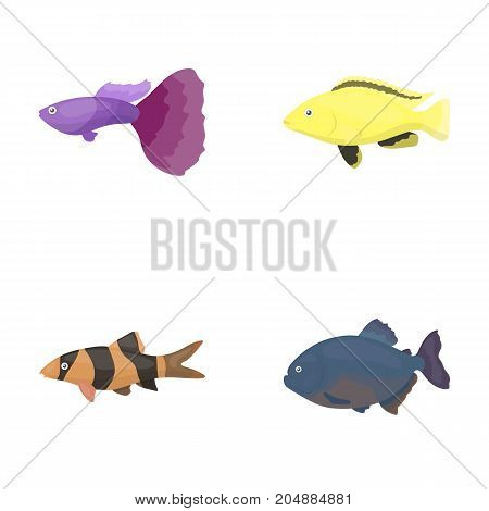 Botia, clown, piranha, cichlid, hummingbird, guppy, Fish set collection icons in cartoon style vector symbol stock illustration .