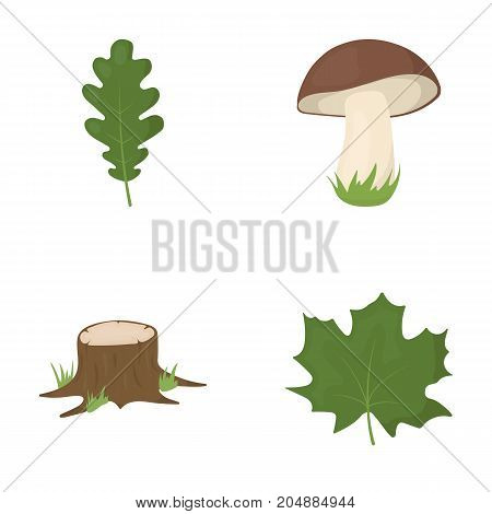 Oak leaf, mushroom, stump, maple leaf.Forest set collection icons in cartoon style vector symbol stock illustration .