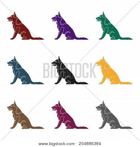 Police dog for detaining criminals. Trained shepherd for prison.Prison single icon in black style vector symbol stock web illustration.