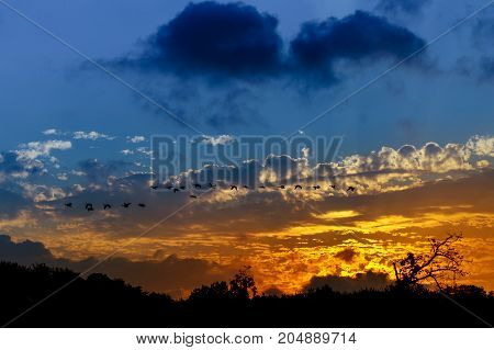 Silhouette Of Birds Flying Pass Sunset And Orange Sky