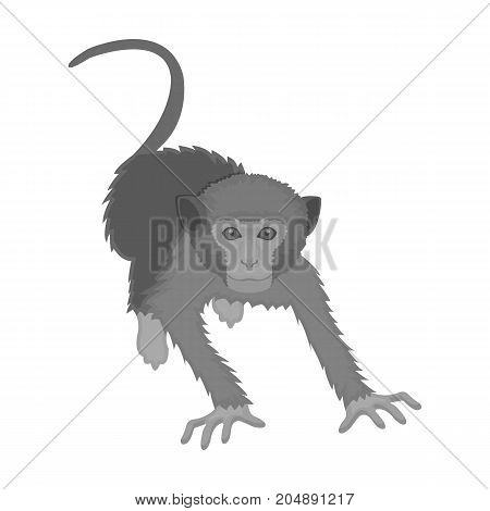 Monkey, wild animal of the jungle. Monkey, mammal primate single icon in monochrome style vector symbol stock illustration .