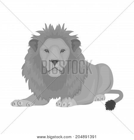 A lion, a wild and ferocious predator. Leo, the king of beasts single icon in monochrome style vector symbol stock illustration .