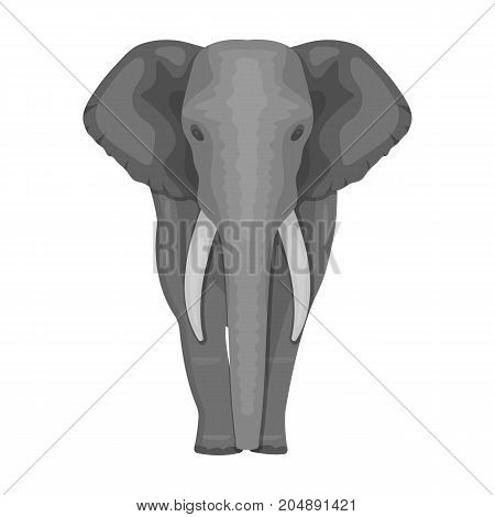 The elephant, the biggest wild animal. African elephant with tusks single icon in monochrome style vector symbol stock illustration .