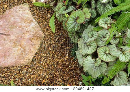 various plant garden with stone  background with copy space for text.