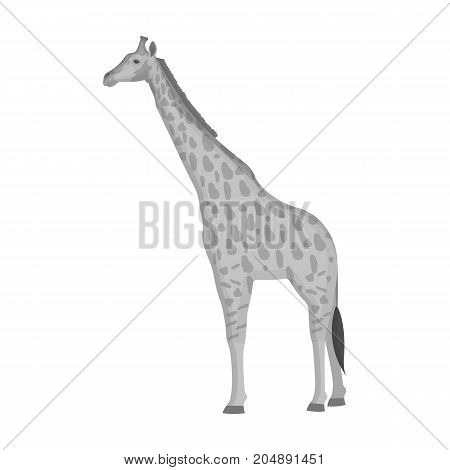 Giraffe is the highest land animal. A wild animal, a giraffe single icon in monochrome style vector symbol stock illustration .