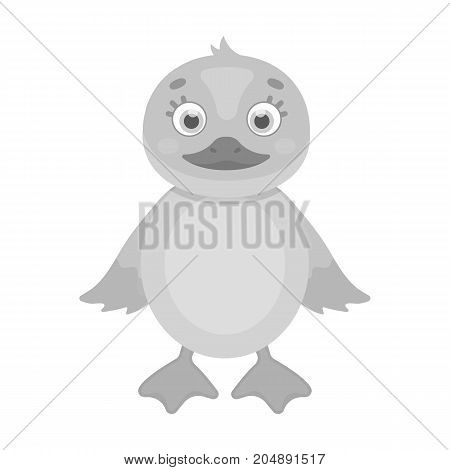 Duckling, single icon in monochrome style.Duckling, vector symbol stock illustration .