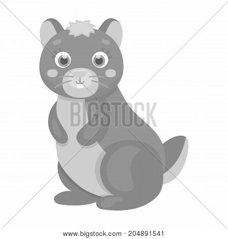 Kangaroo, single icon in monochrome style.Kangaroo, vector symbol stock illustration .