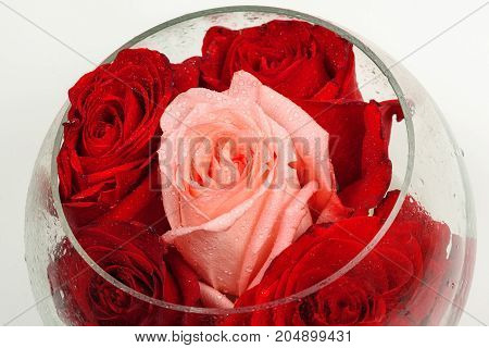 Buds of roses in a round glass vase on a white background.