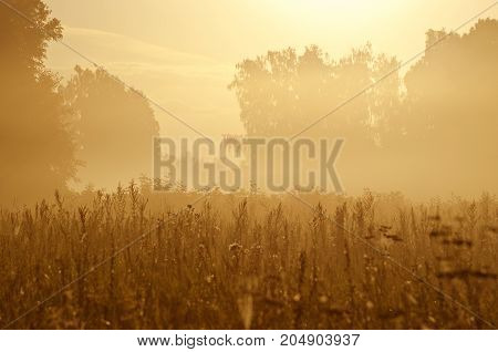 Misty summer end morning sunrise farmland meadow fields background
