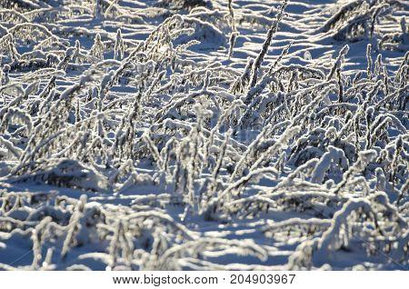 Snowy midwinter frozen meadow grass sunlight background