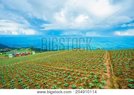 Upcountry farm field on day time Landscape is planting view vegetable organic farm in natural background