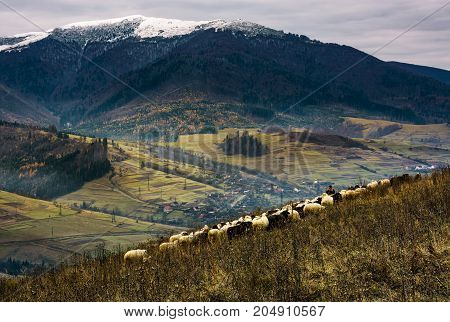 Herd Of Sheep On Hillside In Rural Area