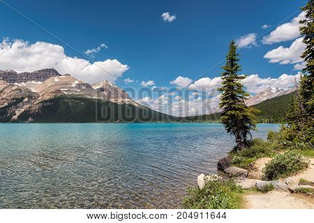 Banff National Park - Bow Lake with pine tree and green water in the Canadian Rockies.
