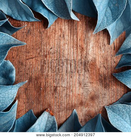 Blue natural plant leaves on wooden background