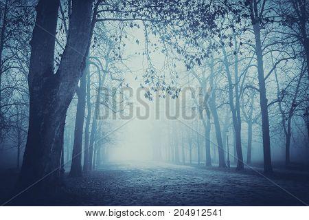 Misty park in Parma Emilia-Romagna Italy. Landscape