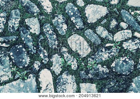 Cobblestone background with grass. Abstract texture of stone