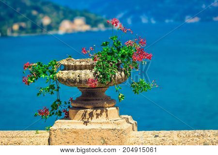 Flowers on the terrace with view of Como lake Italy.
