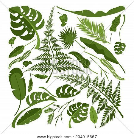Vector collection of exotic plants and tropical leaves