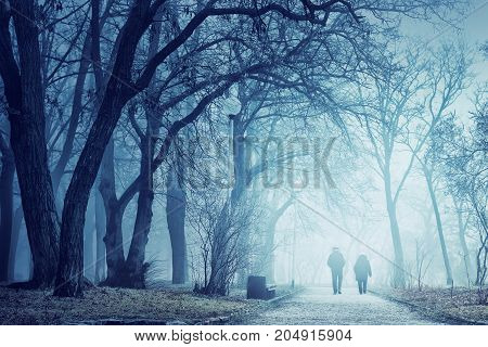 Misty Weather In The Park
