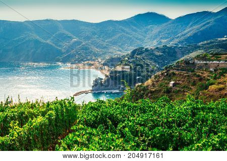 Vineyards Above The Sea