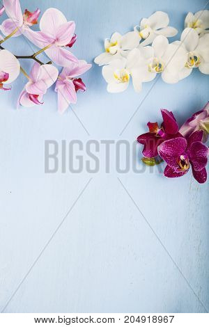 Orchids (phalaenopsis) On A Blue Wooden Table