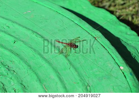 Dragonfly on a green background / Flying insect