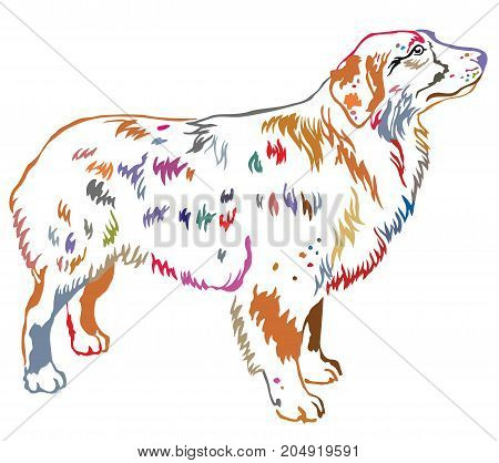 Colorful contour decorative portrait of standing in profile dog Australian shepherd vector isolated illustration on white background