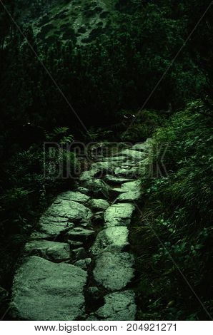 Abandoned gloomy rocky path in the mountain forest at night (horror or Halloween concept) selective focus