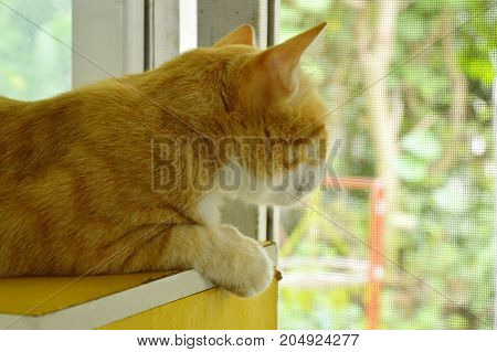 ginger cat watching outside from glass window in home