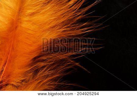 Orange Feather Background