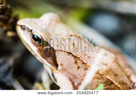 Small Frog Sitting In Grass Near A Pond