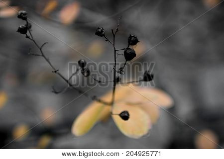 A still life emerges from the background blurred as on a canvas.