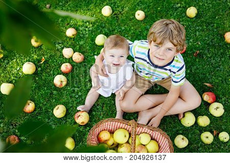 Two children picking apples on a farm in early autumn. Little baby girl and boy playing in apple tree orchard. Kids pick fruit in a basket. Siblings eating fruits at harvest. Healthy nutrition.