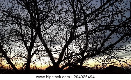 tree branches against the background of the evening sky