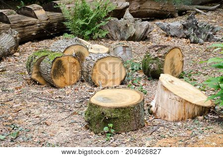Pile of Logs on forest floor freshly cut