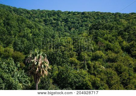 Tropical landscape with mountains and palm trees