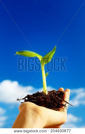 Hand and plant. enviroment concept. Blur background