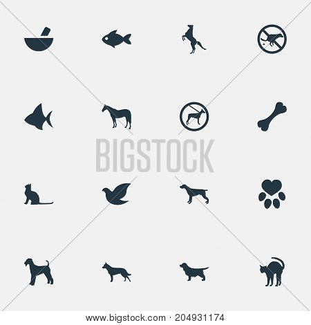 Elements Pigeon, No Animal, Footprint And Other Synonyms Pounder, Dalmatian And Medicine.  Vector Illustration Set Of Simple Animals Icons.